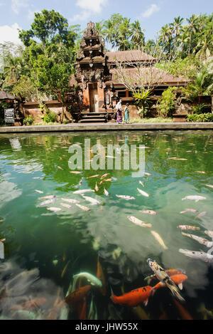 Koi fishes in pool at Pura Tirta Empul Temple, Tampaksiring, Bali, Indonesia - Stock Photo