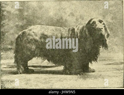 'The new book of the dog : a comprehensive natural history of British dogs and their foreign relatives, with chapters - Stock Photo