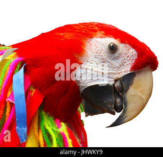Red parrot cutout seen in profile view with yarn and ribbons tassels - Stock Photo