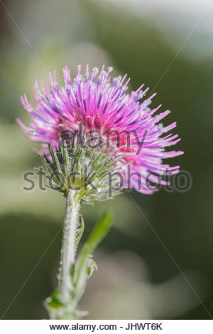Head of a thistle flower during daytime - Stock Photo
