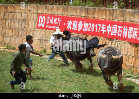 Shilin, China's Yunnan Province. 17th July, 2017. People try to stop running bulls during the torch festival of - Stock Photo