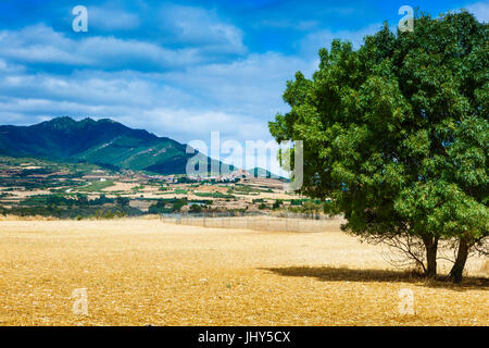 Cereal farm and Montejurra mountain. - Stock Photo