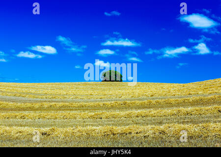 Cereal farm. - Stock Photo