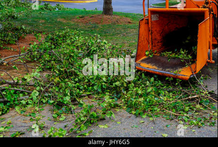 Landscapers using chipper machine to remove and haul chainsaw tree branches - Stock Photo