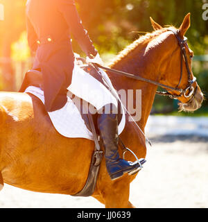 Close up image of sorrel horse with rider at dressage equestrian sports competitions. Details of equestrian equipment - Stock Photo