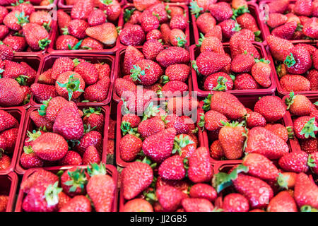 Many strawberries on display in market in red baskets - Stock Photo