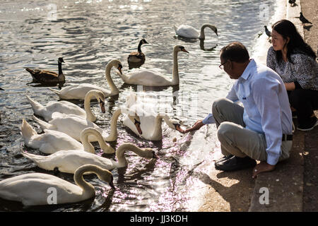 London, UK. 18th July, 2017. UK Weather: Feeding the swans on the Serpentine Lake in Hyde Park on a warm afternoon. - Stock Photo
