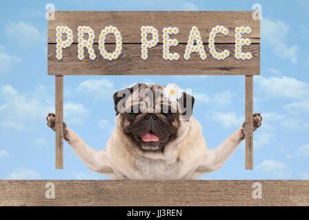 happy smiling pug puppy dog with wooden sign and text pro peace in white flowers on blue sky background - Stock Photo