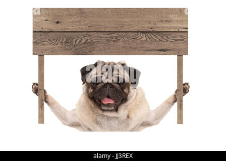 cute smiling pug puppy dog holding up blank wooden board sign, isolated on white background - Stock Photo
