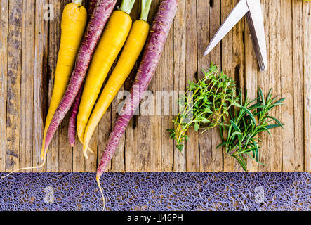 Fresh home grown tri colored carrots on a cutting board with thyme and rosemerry herbs.   The carrots are purple and yellow.  A pair of herb sissors a