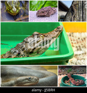 Collage with reptiles and amphibians - Stock Photo