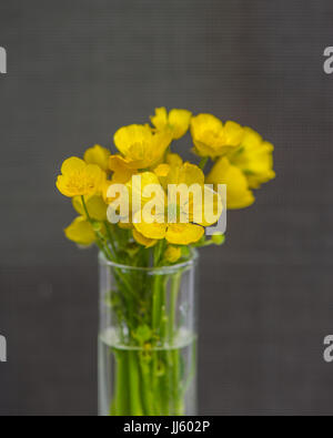 Bouquet of flowering meadow flowers in a vase on a gray background - Stock Photo