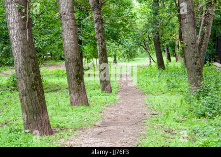 road through the park. nature, background. - Stock Photo