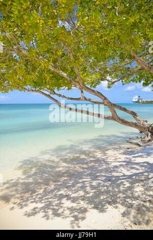 ocean view with tree on beach in aruba, caribbean - Stock Photo