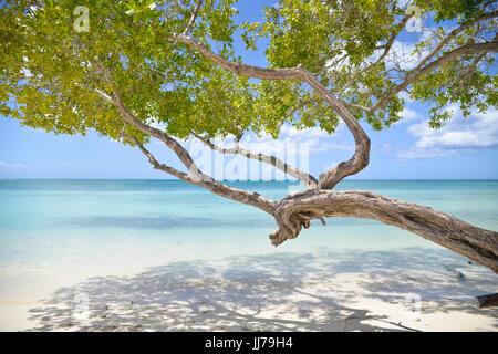 stunning ocean view with tree on beach in aruba, caribbean - Stock Photo