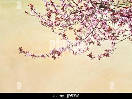 blooming cherry tree with pink flowers at lake with sandy bottom near La Sagrada Familia, Barcelona, Spain - Stock Photo