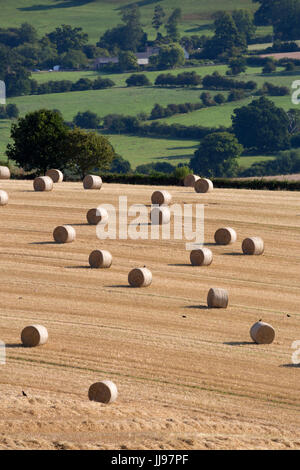 Round hay bales and cotswold farmland at Wadfield farm, Winchcombe, Cotswolds, Gloucestershire, England, United - Stock Photo