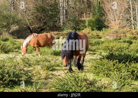 Horse in the Garden, on the way camino Santiago de Compostela, Near of Zubiri, Spain, Europe. - Stock Photo