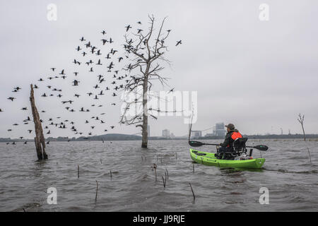 Man in canoe watching birds flying from trees submerged in water - Stock Photo