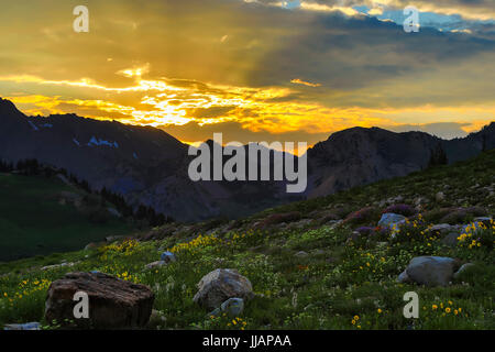 In this view a spectacular sunset lights up the clouds above and the wildflowers below in Albion Basin in the town - Stock Photo