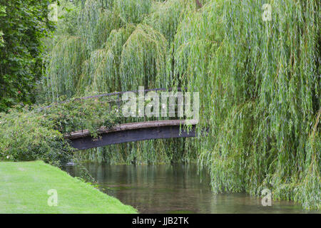 Weeping willow trees around iron bridge over the river in a summer garden . - Stock Photo