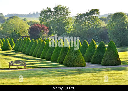 Elizabethan rural garden topiary in historic parklands & gardens with trees now Warner hotel & leisure centre Littlecote - Stock Photo