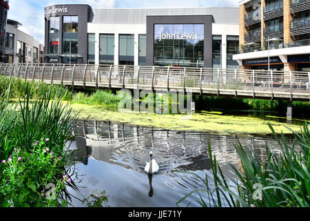 Swan on River Chelmer with John Lewis department store in Chelmsford town centre in major new retail development - Stock Photo