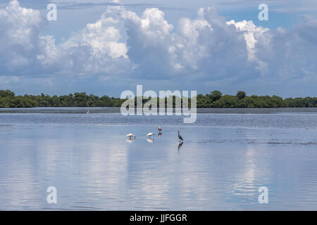Landscape, J.N. ''Ding'' Darling National Wildlife Refuge, Sanibel Island, Florida, USA - Stock Photo