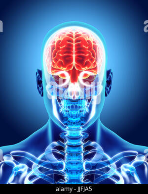 Human Internal Organic - Human Brain, 3D illustration medical concept. - Stock Photo