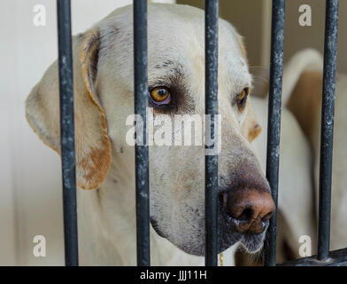 A dog in his kennel looking out behind the bars - Stock Photo