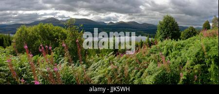 Vegetation around Loch Garry, Highlands, Scotland, United Kingdom - Stock Photo