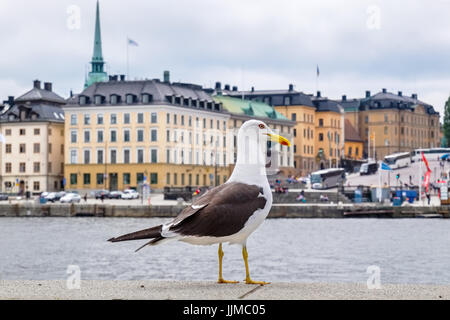 Big seagull in front of the Gamla Stan. Stockholm, Sweden, Scandinavia - Stock Photo