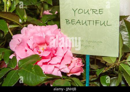 RHS Tatton Flower Show, Knutsford, Cheshire, UK - Stock Photo
