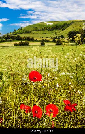 The White Horse below Bratton Camp near Westbury in Wiltshire. - Stock Photo