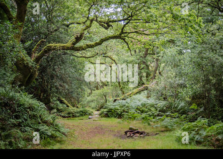 Camping spot in the woodland - Stock Photo