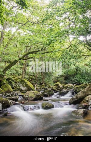 River Plym flowing through ancient woodland - Stock Photo