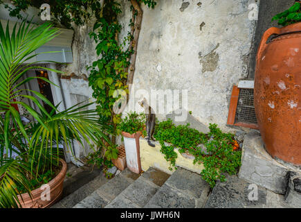 Curious cat looks for insects at an old wall in Positano Italy - Stock Photo