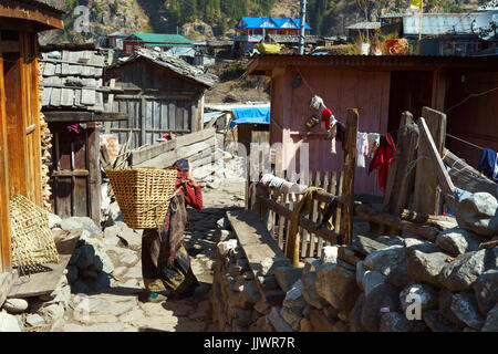 Local woman carrying compost in a wicker basket in the village of Thanchok on the Annapurna Circuit, Nepal. - Stock Photo