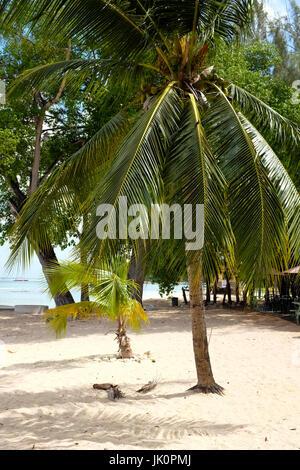 Beach and Coastline, Holetown, Barbados, West Indies - Stock Photo