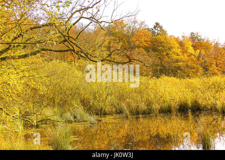 bank area of a forest pond in the midst of a break wood in autumn-coloured, uferbereich eines waldweihers inmitten - Stock Photo