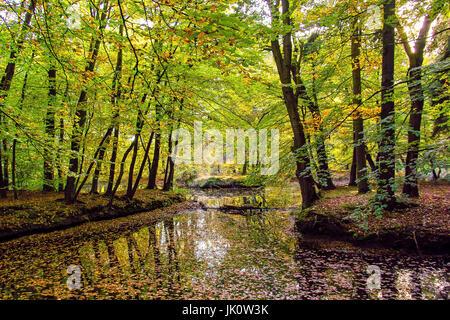 pond in the midst of a bright beech break wood with beginning autumn colouring, weiher inmitten eines lichten buchenbruchwalds - Stock Photo