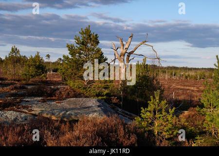 Sweden; moor; Kuleskog; spring, Schweden; Moor; Kuleskog; Fruehjahr - Stock Photo