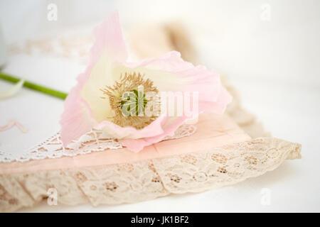 Still life study of a pale poppy - Stock Photo