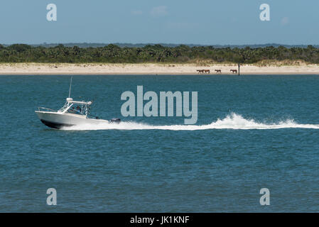 View of wild horses on the beach at Cumberland Island in Georgia from Fort Clinch on Amelia Island in Florida. (USA) - Stock Photo