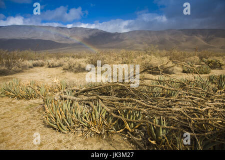 USA, California, Anza-Borrego Desert State Park, landscape - Stock Photo
