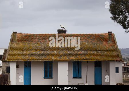 Tunisia, Northern Tunisia, Sejenane, Sejenane train station, stork nests - Stock Photo