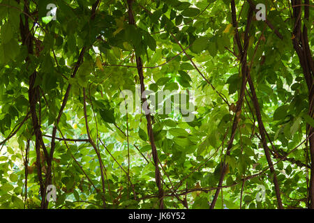 Spain, Andalucia Region, Seville Province, Seville, The Alcazar, Alcazar Gardens - Stock Photo