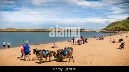 Donkey Rides On Whitby Beach North Yorkshire UK Summer 2017 - Stock Photo