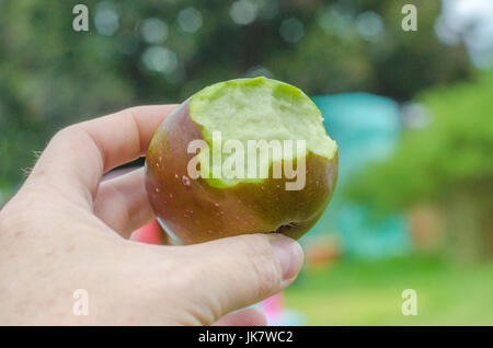 Close up of a hand holding a home grown apple with bites taken out. - Stock Photo