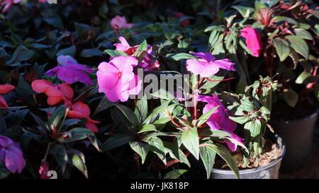 Un jardín de flores, repleto diferentes colores que le dan al mundo belleza, una flor es única por sus tonalidades, - Stock Photo